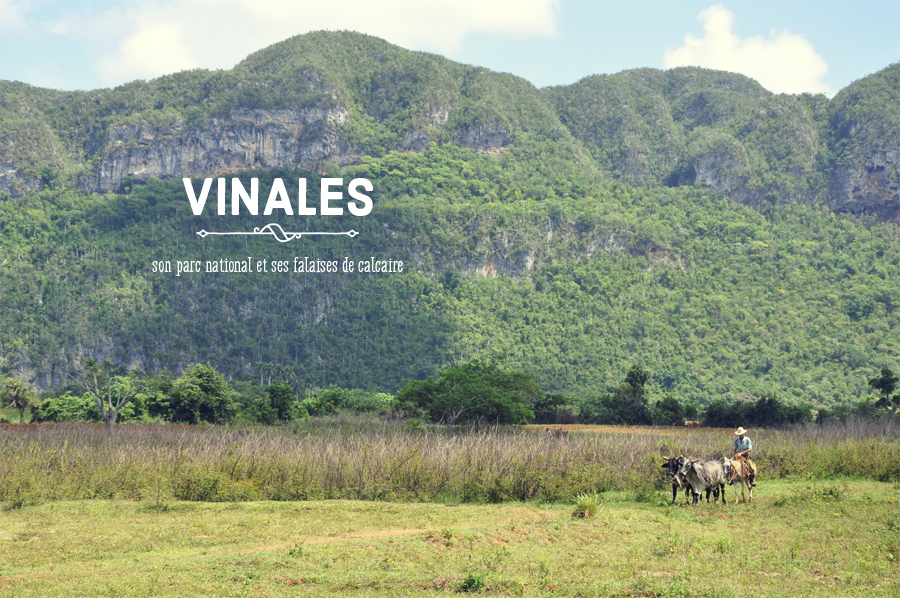 vinales